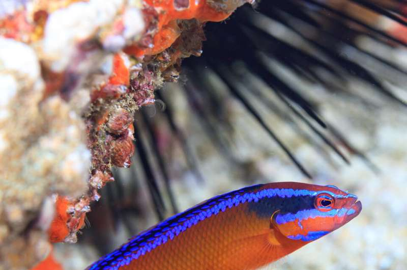 Reduced coral reef fish biodiversity under temperatures that mirror climate predictions