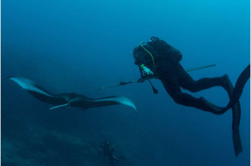 Reef manta rays in New Caledonia dive up to 672 meters deep at night