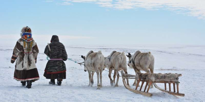 Reindeer were domesticated much earlier than previously thought, new study suggests