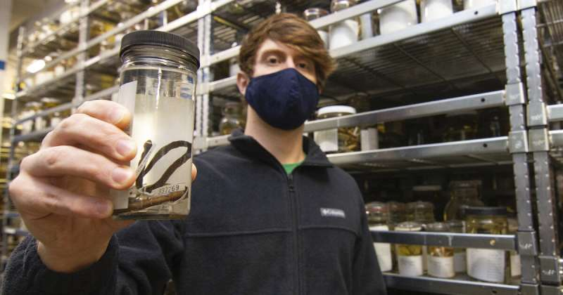 Remarkable new species of snake found hidden in a biodiversity collection