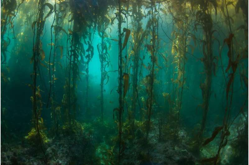 Remote South American kelp forests surveyed for first time since 1973