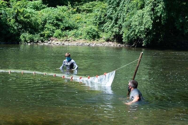 Remove dam, help fish