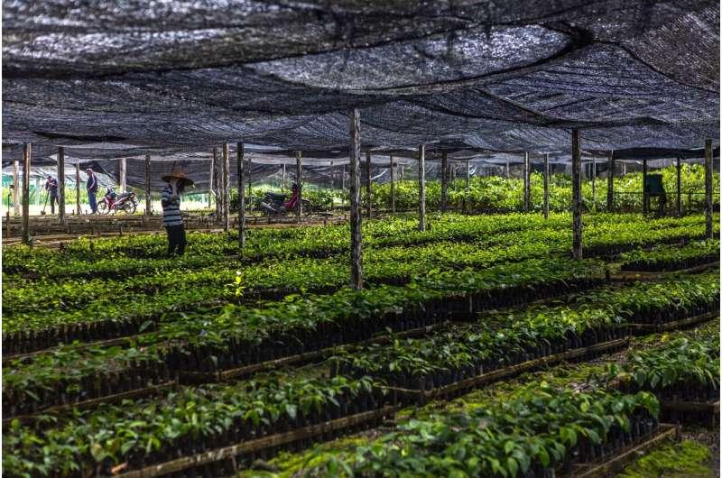Restoring degraded tropical forests generates big carbon gains