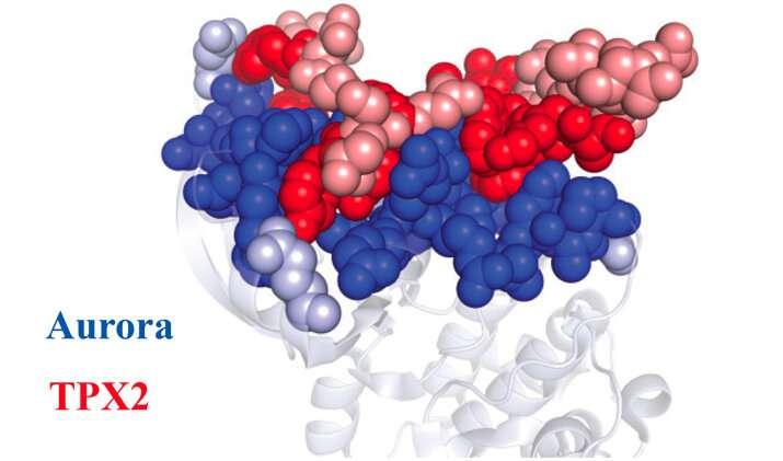 Resurrecting ancient protein partners reveals origin of protein regulation