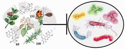 Review of plants' role in antibacterial activity clears new paths for drug discovery