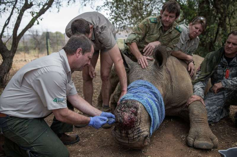 Rhino poaching in South Africa fell by half in the first six months of 2020, in part because a coronavirus lockdown made it hard