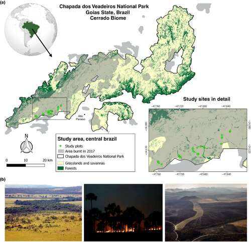 Riparian forests in the savannah: Fires also threaten Brazil's second largest ecosystem