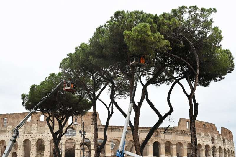 Rome's umbrella pine trees are under threat from a tiny insect called the pine tortoise scale