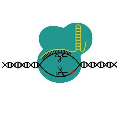 Safer CRISPR gene editing with fewer off-target hits