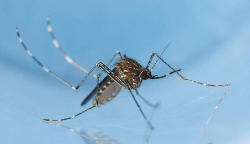 Salt-based mosquito-control products are ineffective, study shows