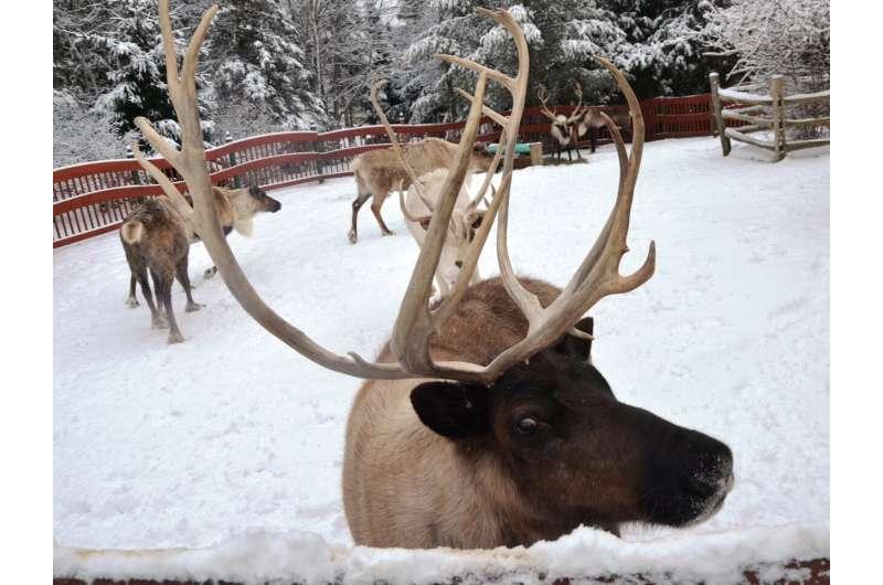 Santa's reindeer outdo U.S. senators at picking stocks, study finds
