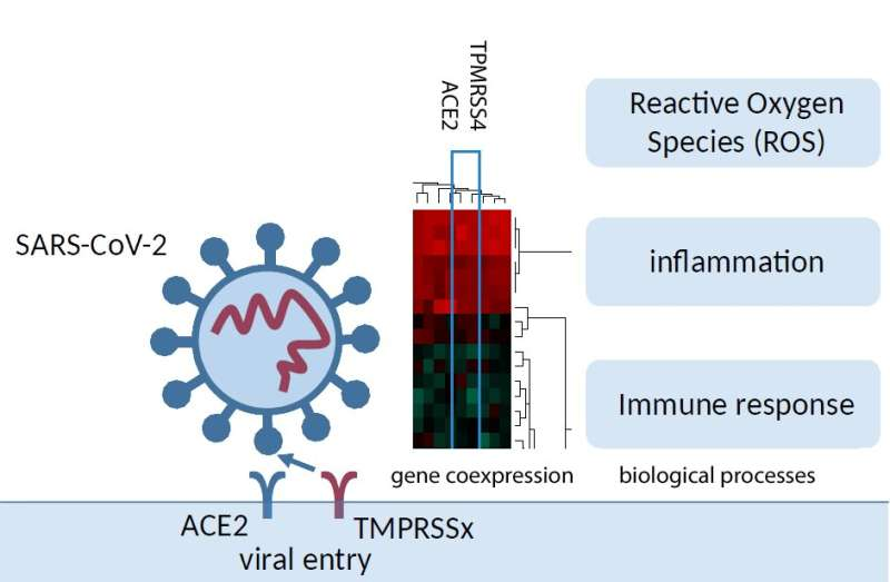 SARS-CoV-2 induces inflammation, cytokine storm and stress in infected lung cells