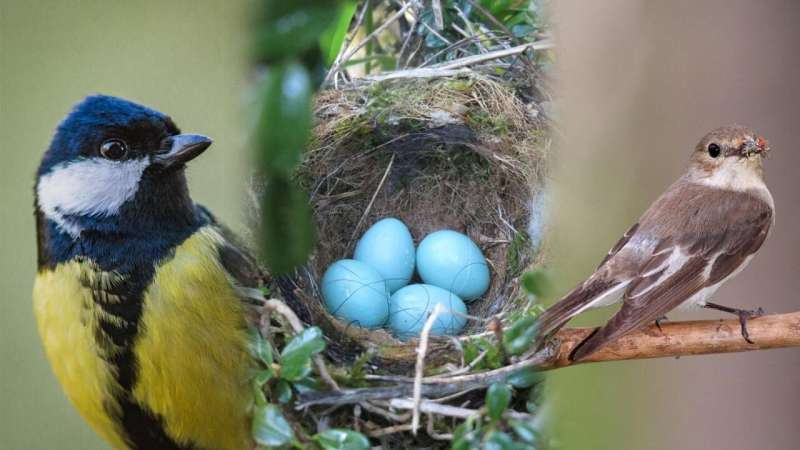 Saving your data together helps birds and bird research