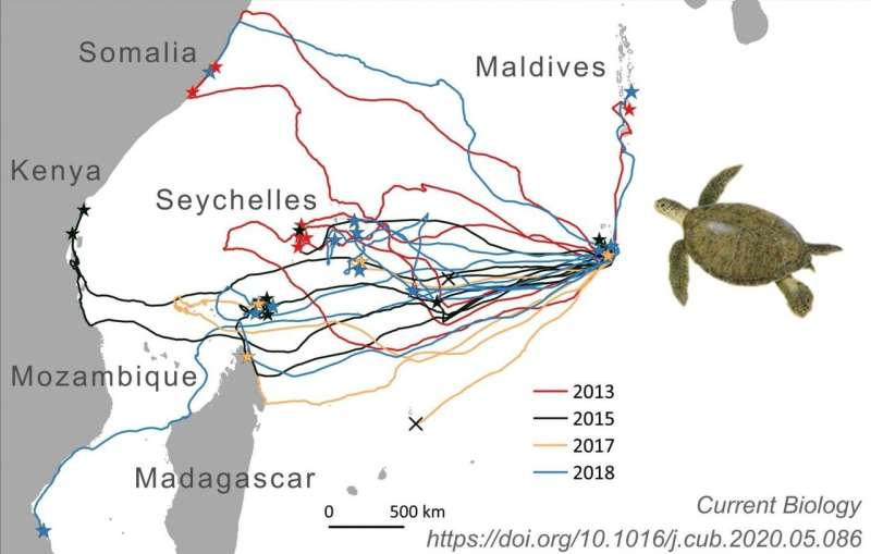 Sea turtles' impressive navigation feats rely on surprisingly crude 'map'