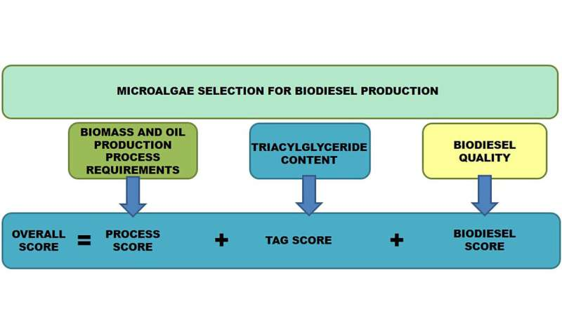 Selecting best microalgae for biodiesel production