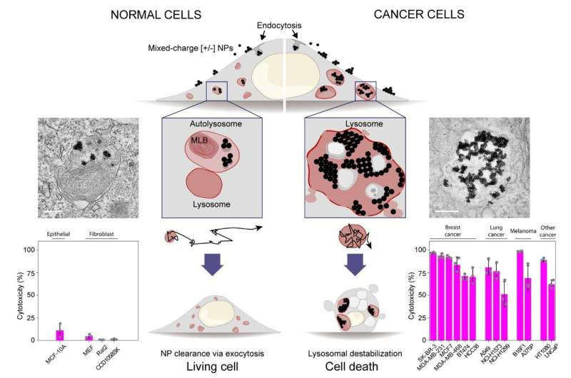 Selective killing of cancer cells by cluttering their waste disposal system