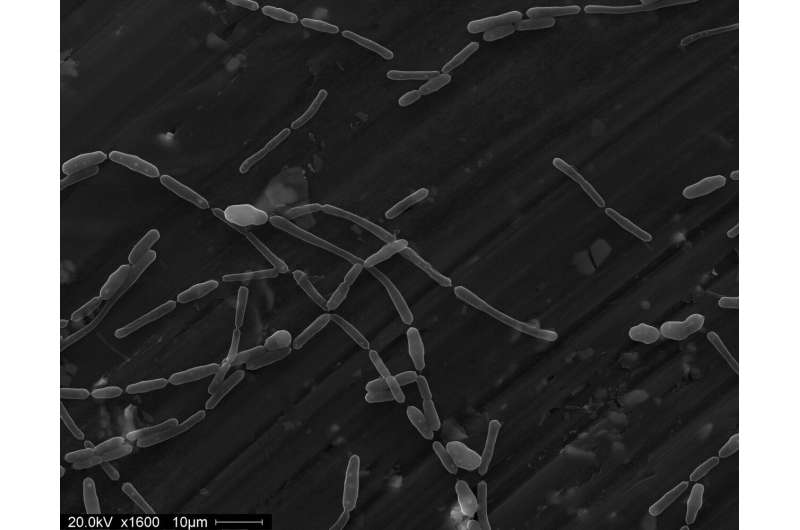 Sellafield research uncovers microbial life in fuel ponds
