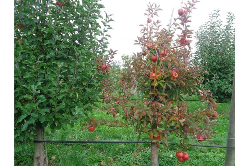 Sensors for early disease symptom detection in European fruit cultivation