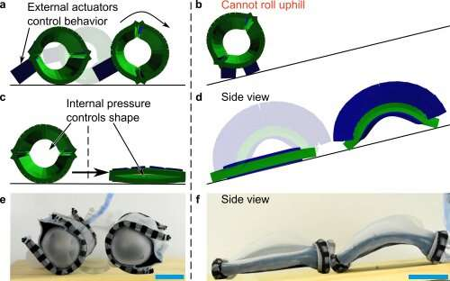 Shape-changing robots that adapt to their environments