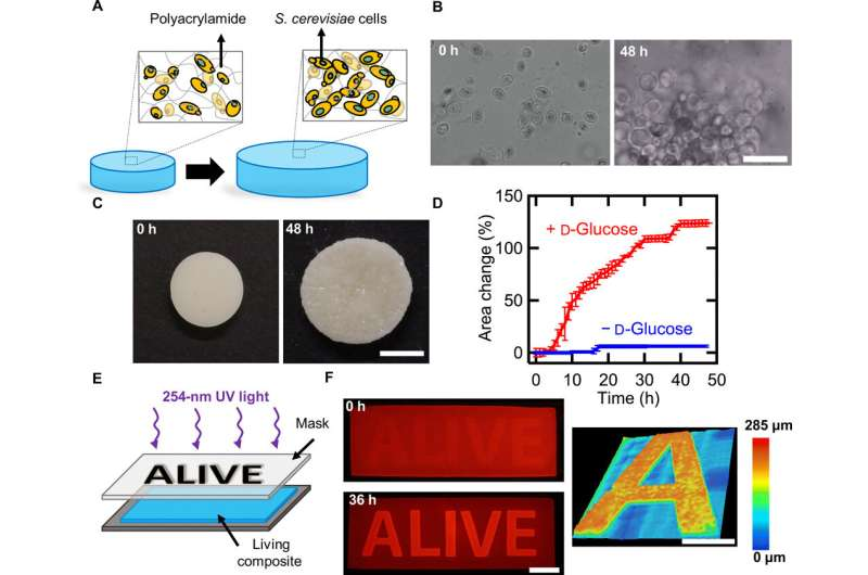 Shape-morphing living composites
