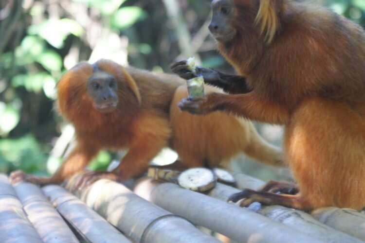 Sharing food aids monkey business