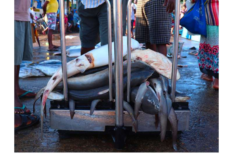 Shark fishing bans partially effective