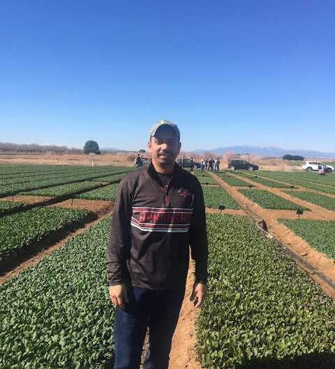 Short-term moisture removal can eliminate downy mildew of spinach