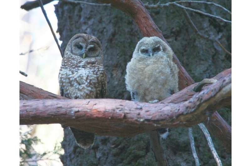 Significant Benefits to Spotted Owls from Forest Fire are Reaffirmed