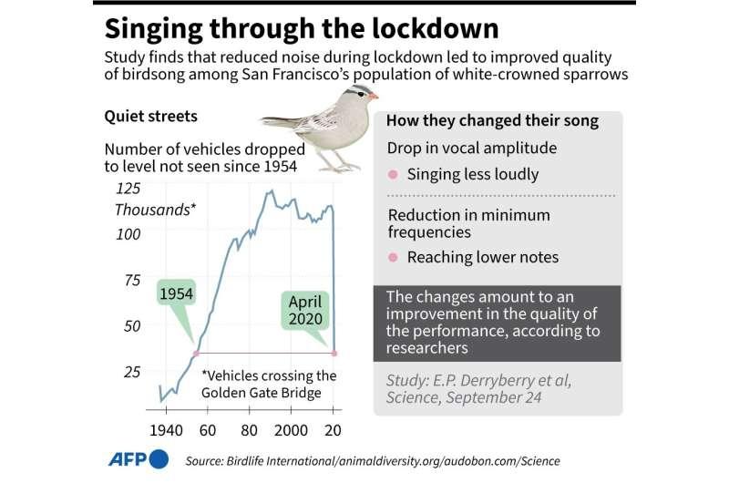 Singing through the lockdown
