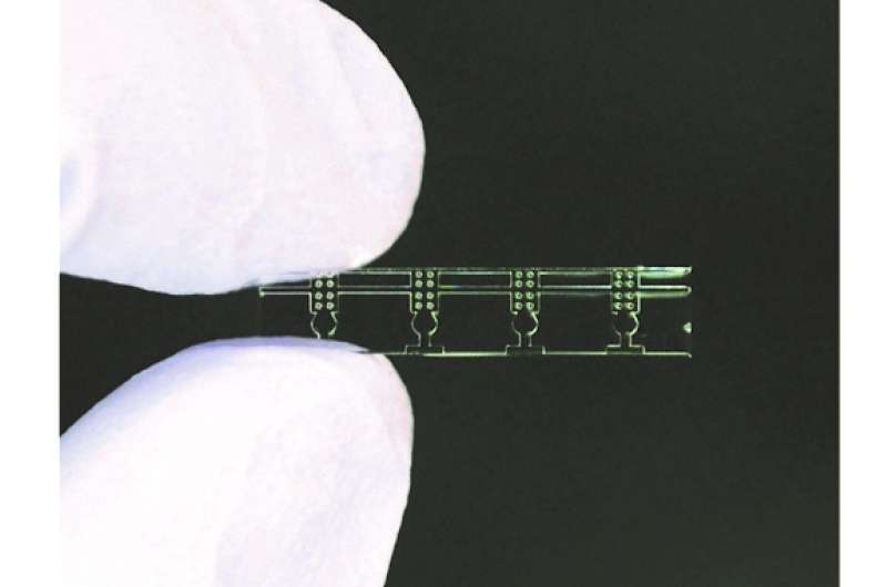 Small see-through container improves plant micrografting