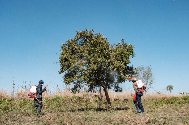 Soldiers have been deployed in Uganda to spray trees and savannas in a bid to beat back the infestation