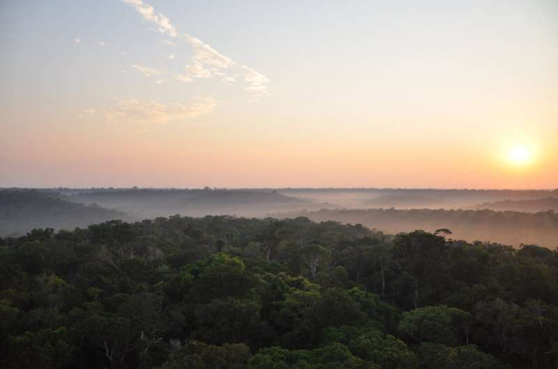 Some Amazon rainforest regions more resistant to climate change than previously thought