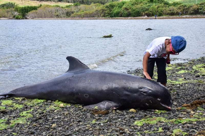 Some of the whales appeared to have injuries