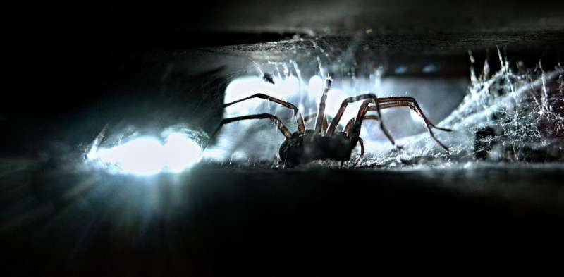 Spider home invasion season: why the media may be to blame for your arachnophobia