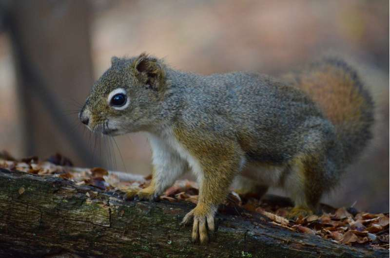 Squirrels need good neighbours