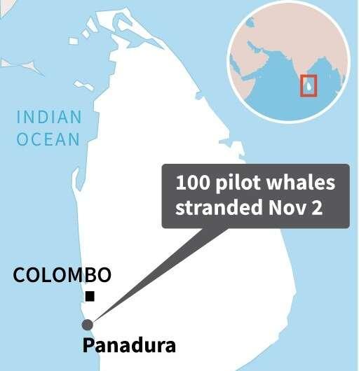 Sri Lanka whale stranding