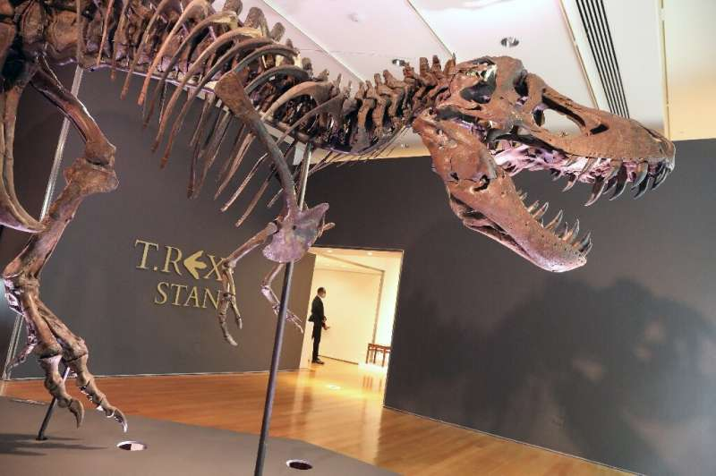 Stan, the record-breaking T-Rex, sold in New York for more than $31 million