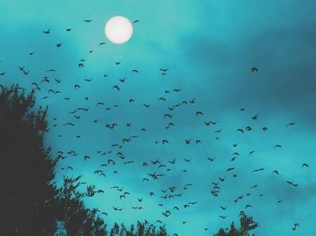 Starlings sleep less during summer and full-moon nights
