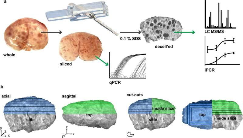 Step toward 'ink' development for 3-D printing a bioprosthetic ovary