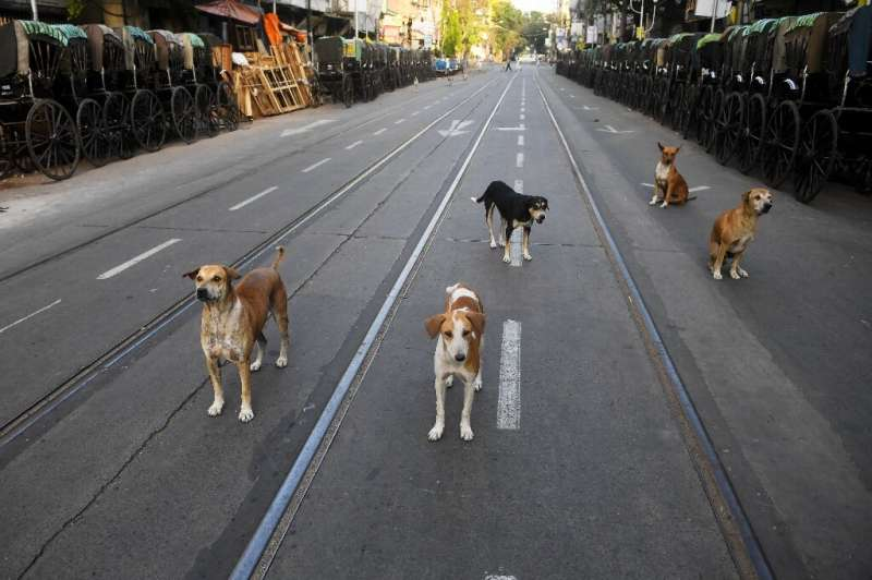 Stray dogs in Kolkata usually rely on scraps and refuse for food but are going hungry during the coronavirus lockdown