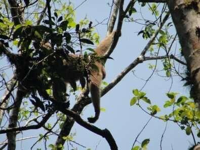 Studies detail impact of mammal species decline in Neotropics