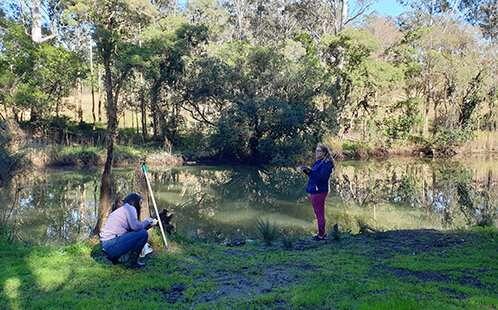 "Study finds platypus paddles in ""surprising"" Sydney waterways"