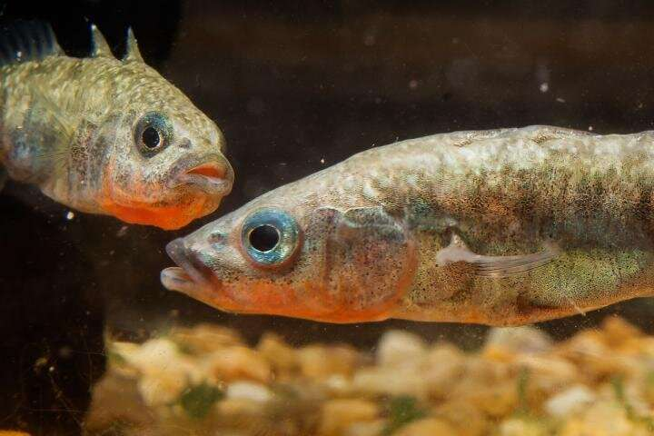 Study finds sexual lineage plays key role in transgenerational plasticity
