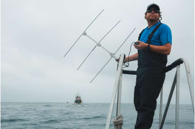 Studying whales with high-tech tools