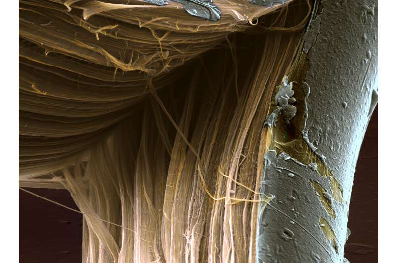Study yields breakthroughs in understanding failure of high-performance fibers