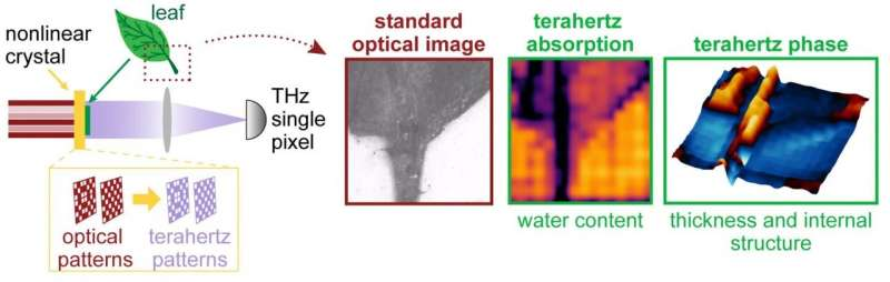 Sussex researchers combine lasers and terahertz waves in camera that sees 'unseen' detail