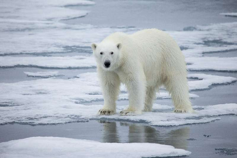 Svalbard is known for its polar bears, which a recent study predicts could all but disappear within the span of a human lifetime