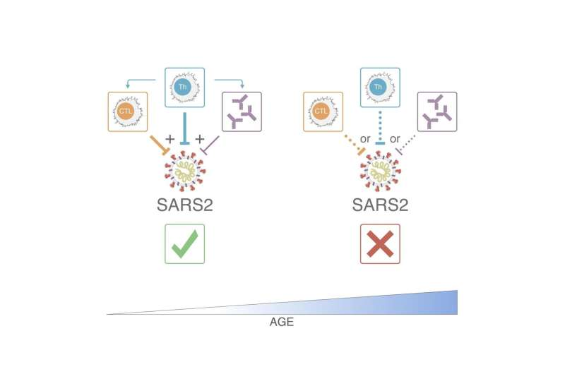 T cells take the lead in controlling SARS-CoV-2 and reducing COVID-19 disease severity