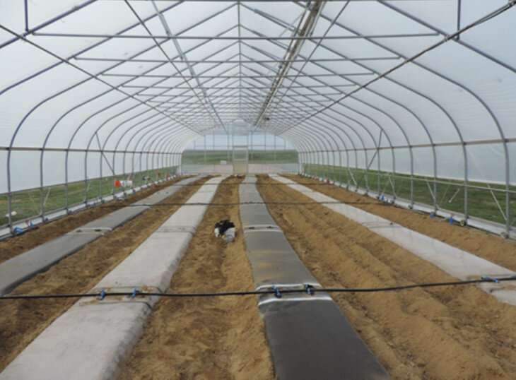 Technique used to suppress soil pathogens, pests in high tunnels can work in Pa.