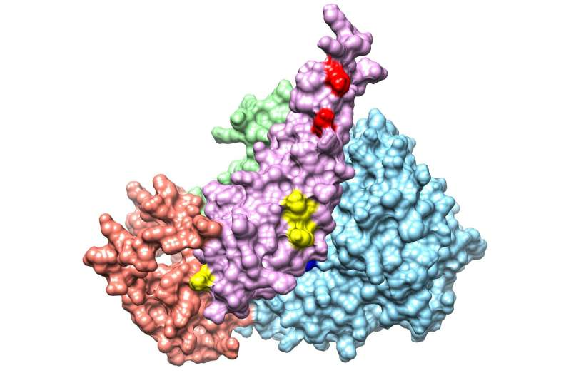 Technologies converge on interacting surfaces in protein complexes